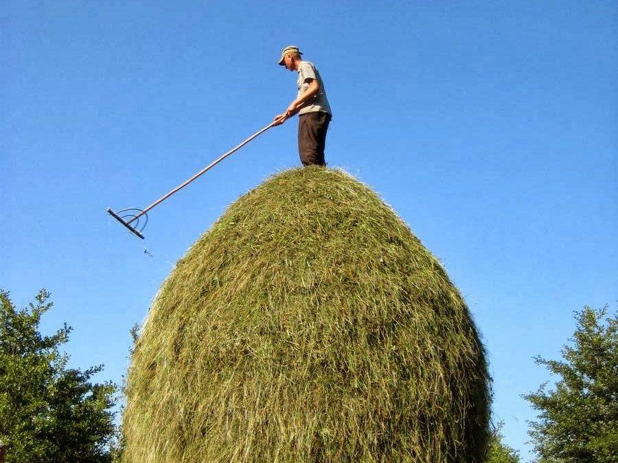 All Hay, No Needle?